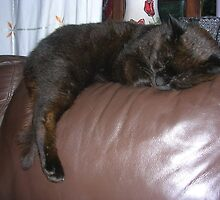 Sleeping Sooty by Peter Allton