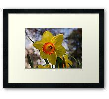 Happy Spring Blossom Framed Print