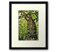 Cerval, Masai Mara, Kenya Framed Print