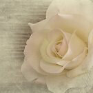 A Rose by homendn