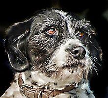Terrier by John Lynch