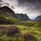 Scotland - Glencoe Heather by Angie Latham