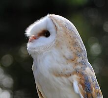 Owl by Care Johnson