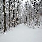 Snowy Entrance by Lynn Gedeon