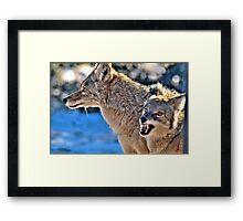 Coyote Buddies (HDR) Framed Print