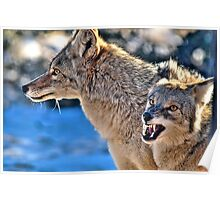 Coyote Buddies (HDR) Poster