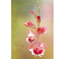 Candy Cane Gladiolas Photographic Print