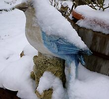 Snow On The Blue Jay by WildestArt