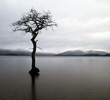 Lone by Pat Millar