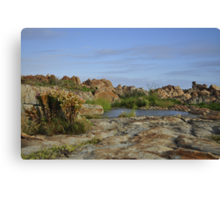 Oases next to the sea, Betty's Bay Canvas Print