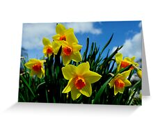 Daffodils, Dunfermline Abbey Greeting Card