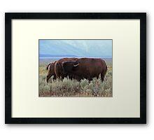 Buffalo Clan Framed Print