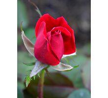 One Rose Photographic Print