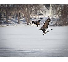 A Pair Of American Bald Eagles Photographic Print