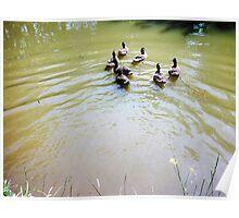 Ducks.  Poster