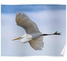 Graceful Flight Poster
