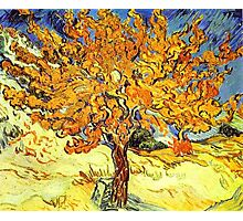 The Mulberry Tree, Vincent van Gogh Photographic Print