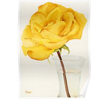 Glass Vase and Rio Samba Rose Poster