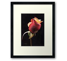 Rio Samba Rose Revisited Framed Print