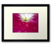After The Rain 3 Framed Print