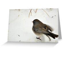 Winter Snow Bird 4 Greeting Card
