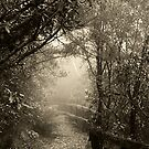 A Path through the Mist by Clare Colins