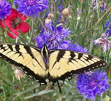 Tiger Swallowtail  by DesignDorice