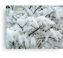 Tiny Branches Covered In Snow Canvas Print