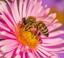Bee 1 by Mark Bangert