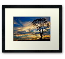 Lone Gum at Sunset #1 Framed Print
