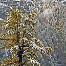 End of fall - begin of winter by Arie Koene