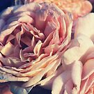 """""""Roses Forever """" by Rosehaven"""