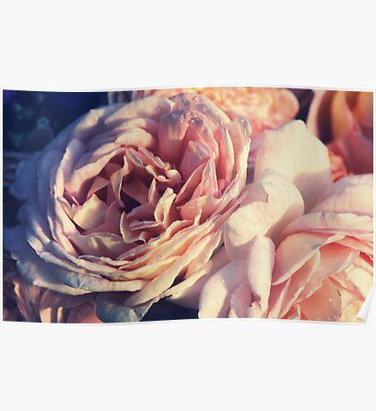 """""""Roses Forever """" Poster"""