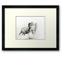 horses herd Framed Print