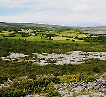 Farmlands of the Burren County Clare Ireland by Sean  Carroll