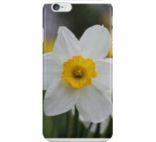 A Daffodil Amongst Daffodils iPhone Case/Skin