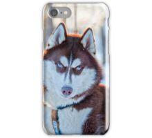 Siberian Husky iPhone Case/Skin