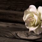 Rose and Wood by homendn