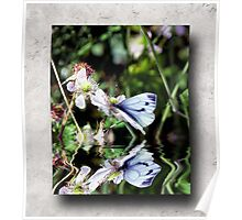 Orange-tip Butterfly Reflections Poster