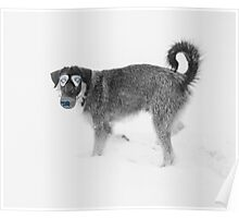 Stray Dogs' Guide To Sochi 2014. Poster