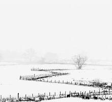Langdale Fields by Mark Hooper