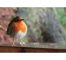 A Robin Photographic Print