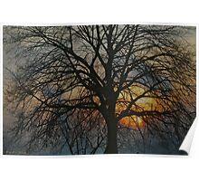 December Landscape. 2013.Made in Doctor Andrzej Goszcz. Poster