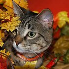 Tasha In The Leaves by jodi payne