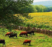 Sunflower Farm by john scates