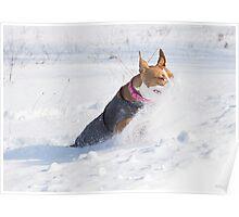 Pitt Bull Snow Plow Poster