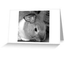 Cadbury the Rabbit Greeting Card