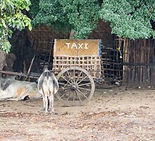 taxi by Anne Scantlebury