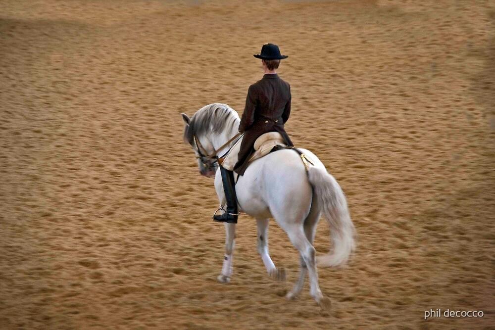 Lipizzaner Stallion by phil decocco