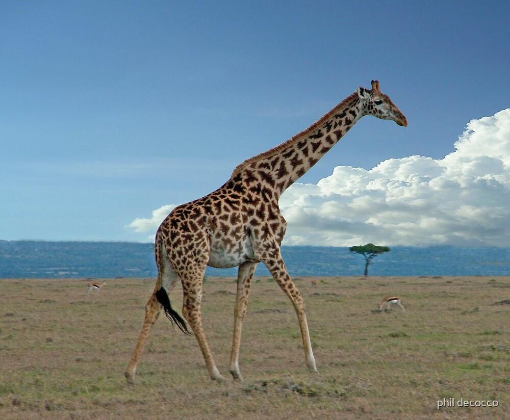 Giraffe On The Run by phil decocco